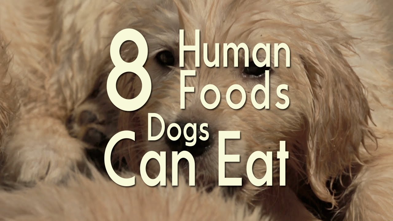 8 Human Foods Dogs Can Eat Youtube