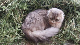 Необычный дом для кота. Супер Кот Макс и его проделки.