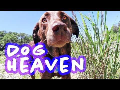 DOG HEAVEN | Rescue Dogs Swimming at Annual Picnic