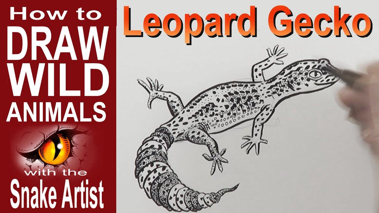 how to draw a leopard gecko intermediate youtube