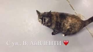 Волонтерская работа в приюте для животных =^..^= СИАМСКИЕ КОШКИ ( Часть 1)