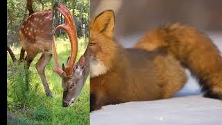 Природа и животные  Приморского края