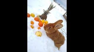 Как выживают кролики зимой.