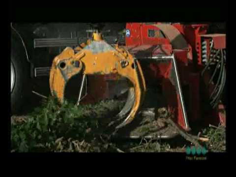 Serveis d 39 estellat fitor forestal youtube - Fitor forestal ...