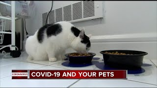 A local veterinarian warns of transmitting COVID-19 to your pets