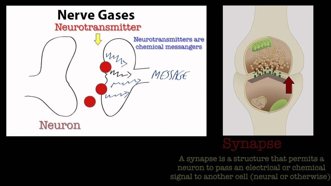 Nerve Gases.
