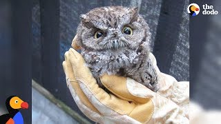LIVE: Rescue Baby Owl Feeding WildCare | The Dodo LIVE