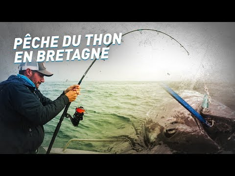 Fiiish - Pêche du thon en...
