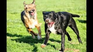 Aggressive Dog Help