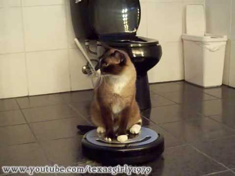 ROOMBA driver Cat uses iRobot Roomba 560 Robotic Vacuum Cleaner. HelensPets.com