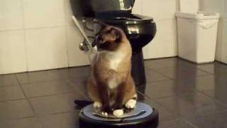 ROOMBA driver Cat uses iRobot Roomba 560 Robotic Vacuum Cleaner. HelensPets.com