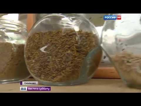 Вопрос: Как избавиться от серых мясных мух?