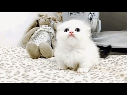 Adorable Munchkin Kittens To Cheer You Up