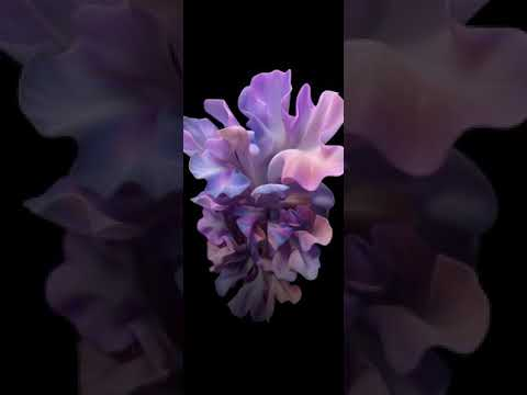 Download Galaxy Z Flip Live Wallpaper Stock Blushing Flowers Free 1080 2636 Fullhd Amoled Youtube