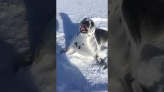 Туры в Арктику!
