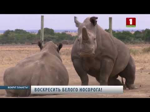 Вопрос: Сколько хромосом у носорога?