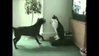 best funny animal compilation 2012