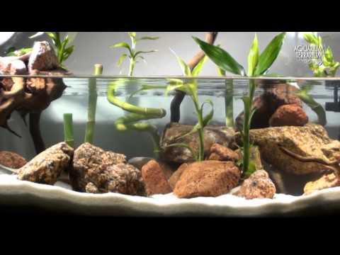 Aquascape Setup Series/Aqua Terrarium - Bamboo Style - Animalia Kingdom Show
