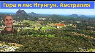 Природа Австралии. Гора и лес Нгун Нгун. (видео 097)