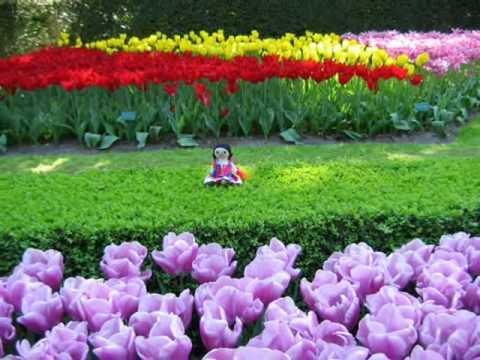 Tulipanes en youtube - Jardines de holanda ...