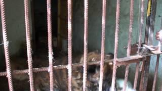 самара приют для бездомных животных участие 2)