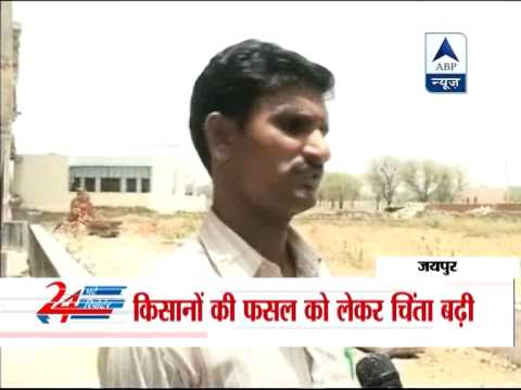 Farmers distressed in Jaipur as rains continue to play truant