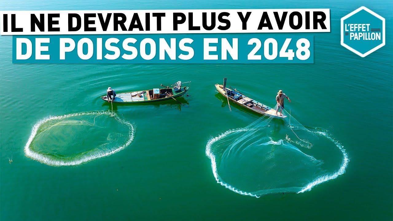 Download IL NE DEVRAIT PLUS Y AVOIR DE POISSONS EN 2048 (Italie) - L'Effet Papillon