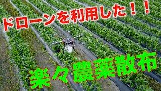 農薬散布ドローントウモロコシ防除#101 thumbnail