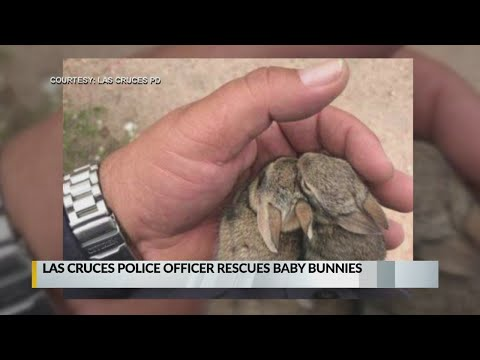 Bama, Rob & Heather - C'mon Get Happy: Officer Rescues Two Baby Bunnies!