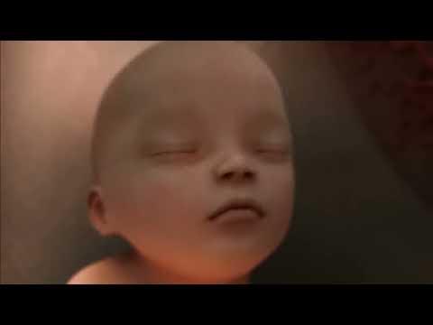 La naissance de la vie sur une musique de Mozart
