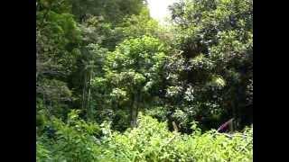Microcuenca de Río Hondo (Bosque comprado para conservación)