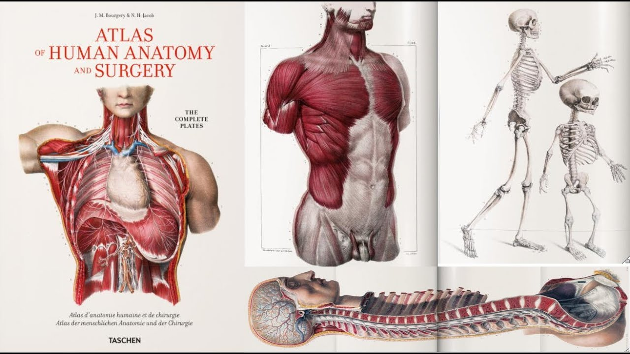 Atlas of Human Anatomy and Surgery - YouTube
