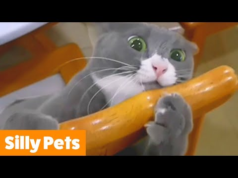 Cutest Silly Pets | Funny Pet Videos