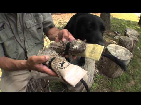 Retriever Training: Using Bird Feathers