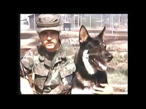 War Dogs Of Vietnam