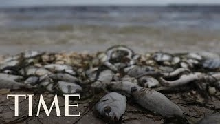 Red Tide Is Killing Marine Life And Scaring Away Tourists In Florida | TIME