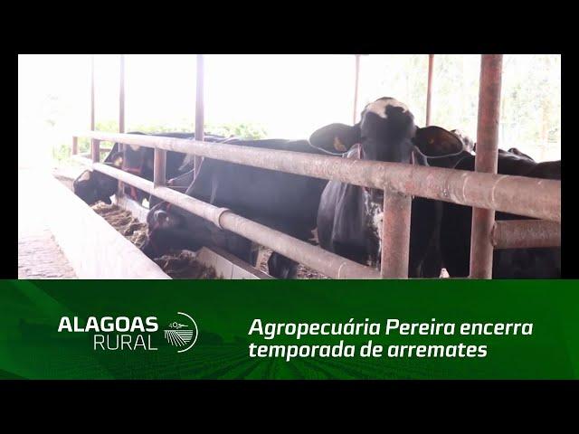 Agropecuária Pereira encerra temporada de arremates do primeiro semestre em AL