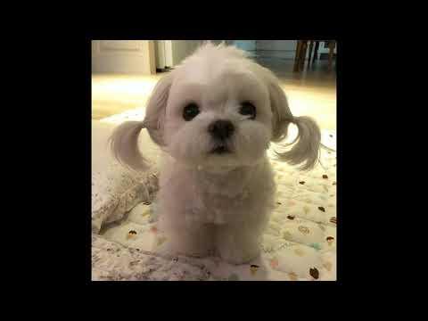 Sunsim - The Cutest Dog Ever ❤️