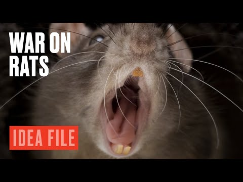 The Rat Apocalypse in New Zealand