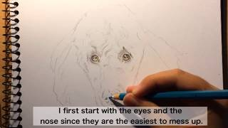 How To Draw Poodle/Curly Fur - Tutorial