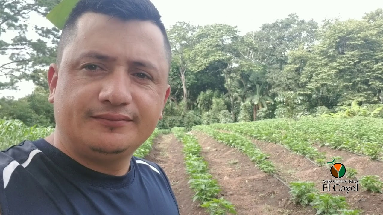 Cultivó de Chile habanero el coyol
