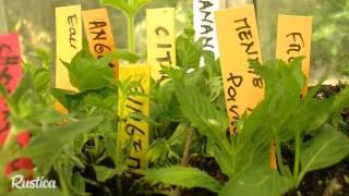 Des plantes aux goûts insolites