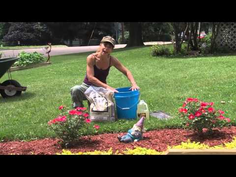Dig Info Garden Tool Care
