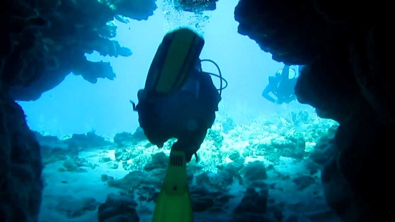 Hole in the wall dive site west end roatan coconut tree divers youtube - Roatan dive sites ...