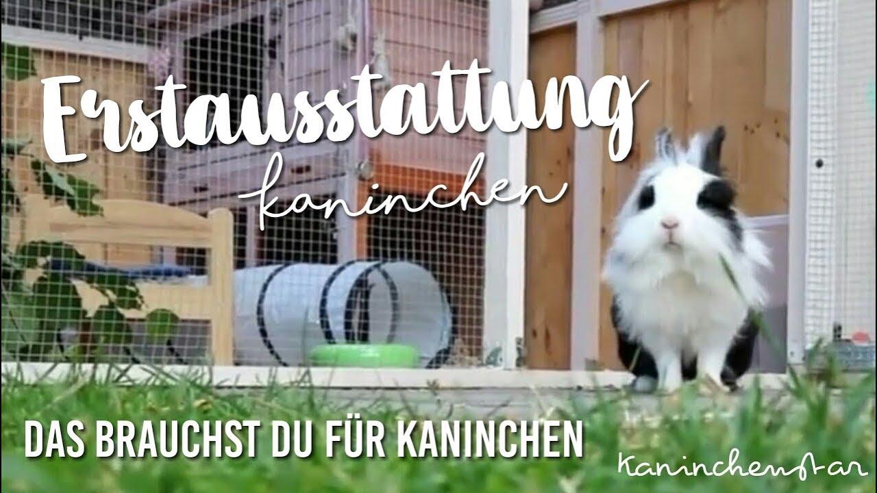 Kaninchen ERSTAUSSTATTUNG   Das brauchst du für deine 8. Kaninchen 💗🐇    Kaninchenstar