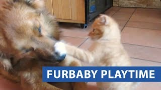 Cats Surprising Dogs