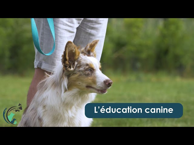 L'éducation canine à la clinique vétérinaire Saint Roch