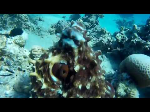 Red sea Diving: Fort Arabesque House reef