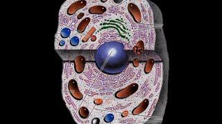 Клеточный уровень жизни