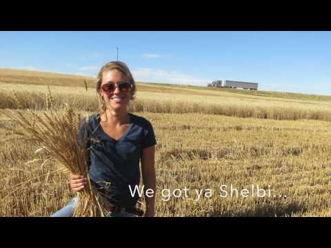 Frieling Farms Harvest 2016